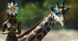Girafe Chamanisme Loup Blanc