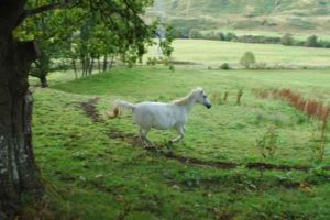 Animal Chamanisme Loup Blanc