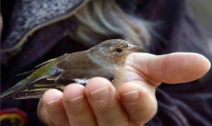 Un oiseau ramené à la vie