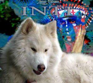 Musique chamanique Inti Loup Blanc